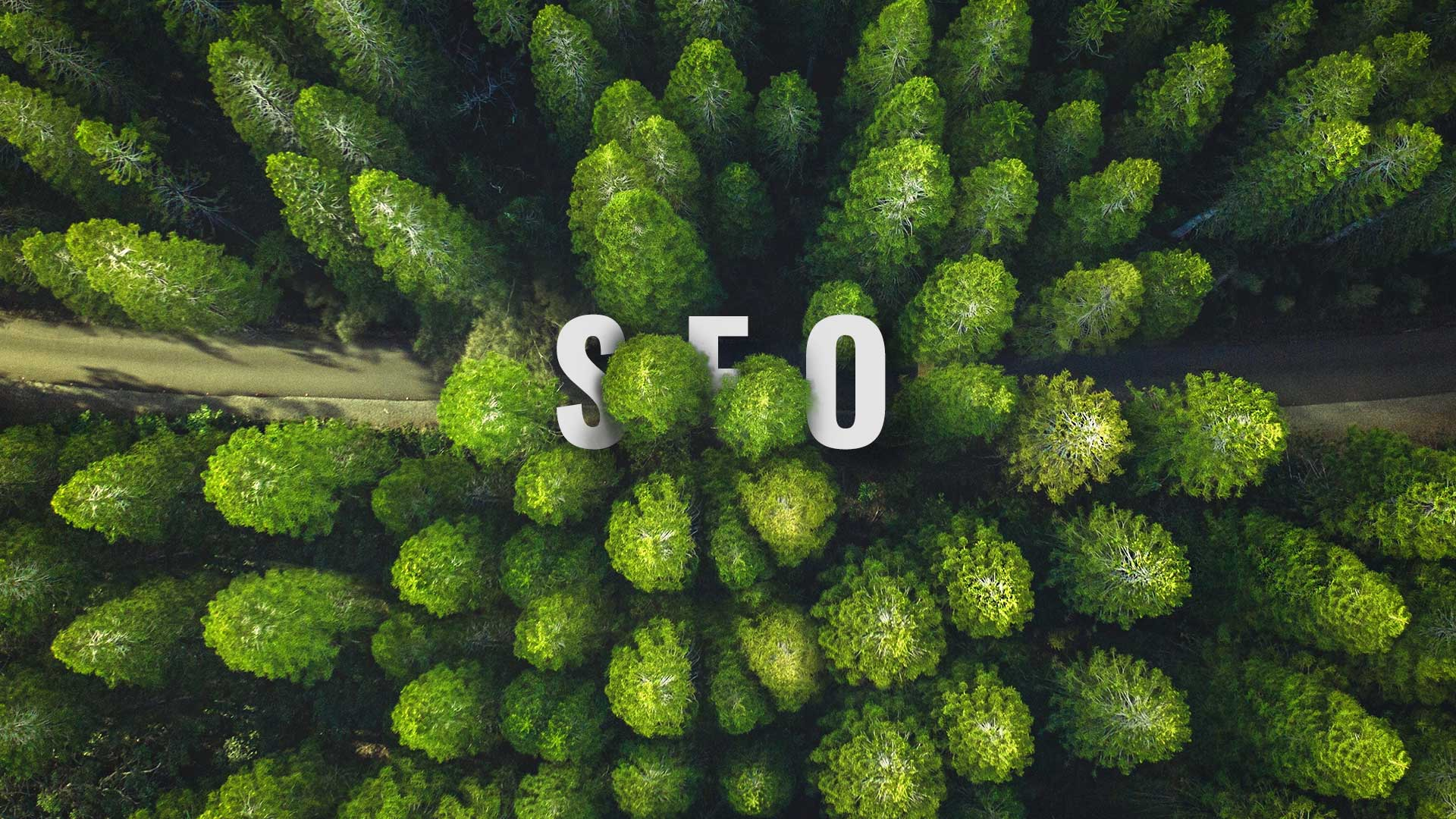 aerial view of SEO word in the woods